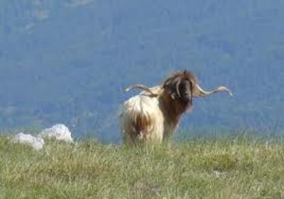 Животинският свят в Славянка планина
