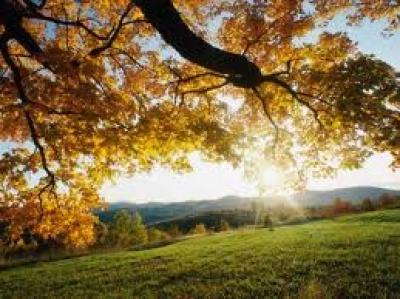 Растителният свят в планина Славянка
