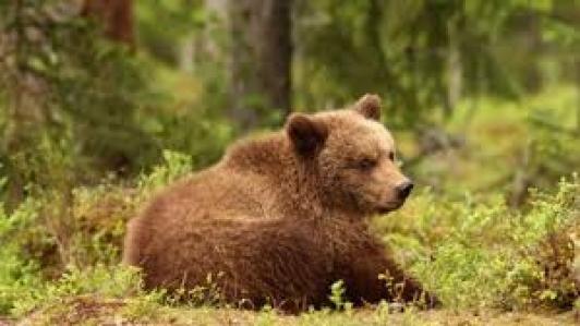 Растителност и животински свят  - Витоша планина