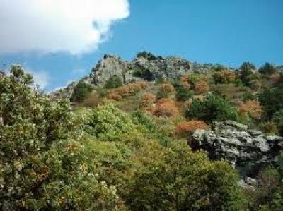 Дялове в Стара Планина