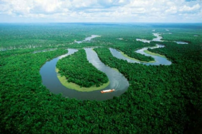 Амазонската дъждовна гора