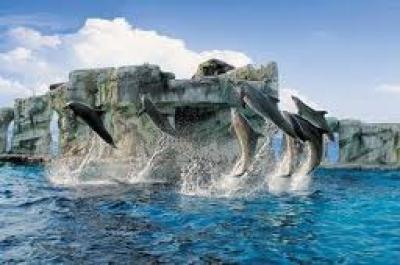 Rimini делфинариум