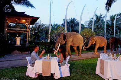 История на слонския сафари парк